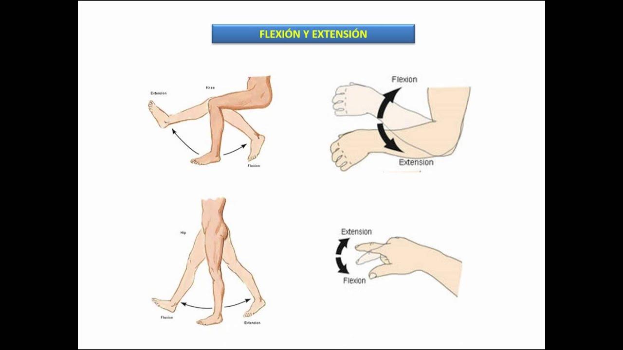 Posición anatómica, ejes y planos de referencia Términos de posición ...