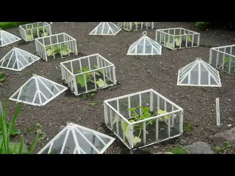 Winter Gardening Ideas And Inspiration