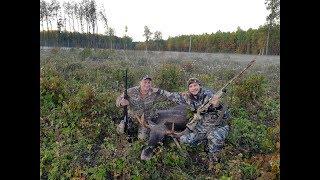 Охота на лося на гону в Татарстане