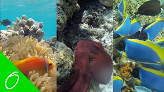 snorkeling diving in maldives beautiful and rare fish caught on camera