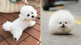 AWW CUTE BABY ANIMALS Videos Compilation cutest moment of the animals 2020 - Soo Cute! #49