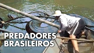 AS CRIATURAS MAIS MORTAIS DA AMAZÔNIA