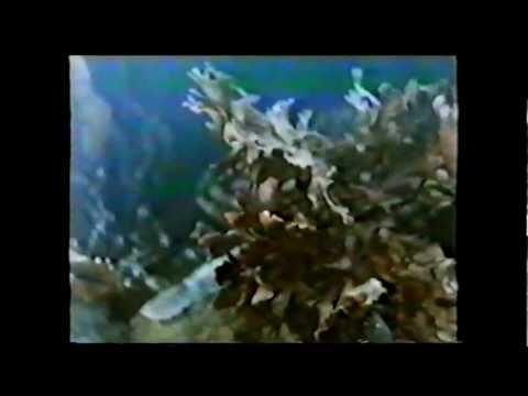 Морские водоросли: полезные свойства и разновидности