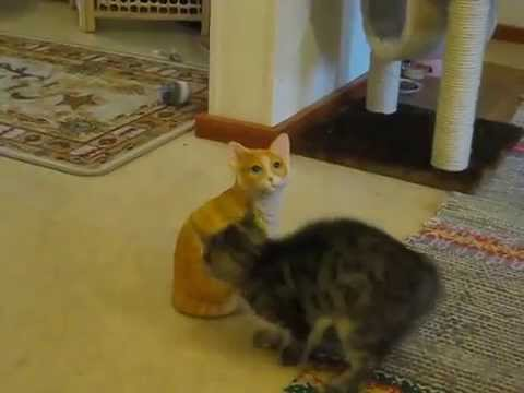 Do Yourself A Favor And Watch This Kitten Attack A Ceramic Cat