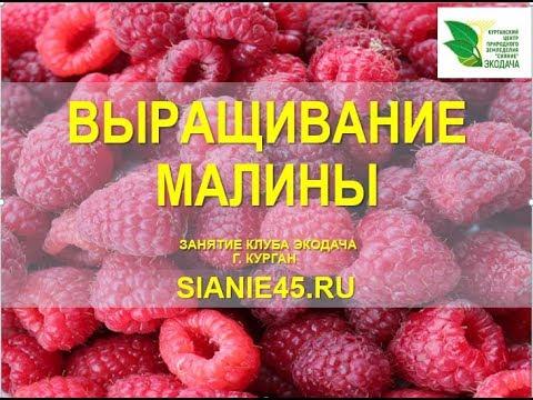 Вопрос: Какая ягода похожа на малину?