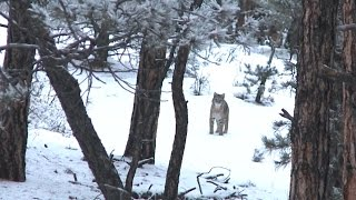 Video Calling in a  Bobcat with FoxPro - Fred Eichler download MP3, 3GP, MP4, WEBM, AVI, FLV Agustus 2017