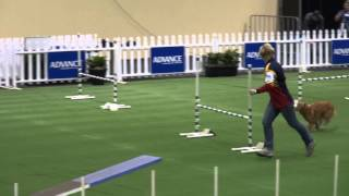 Dog Agility Adelaide Royal Show