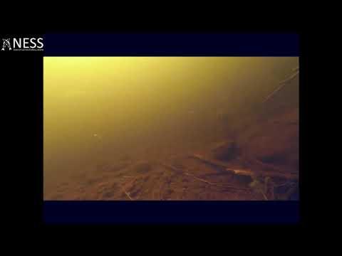 Рыбаки сняли на камеру Лох-несское чудовище