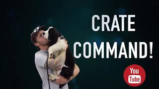 Crate training a puppy with purely positive reinforcement Americas Canine Educator