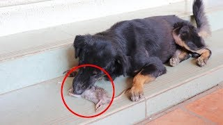 Dog killed mouse done then can not take mouse go far away from him
