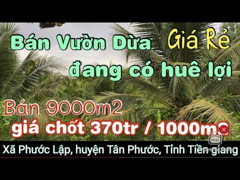 T762❤️🌸 Bán Đất vườn Dừa giá rẻ 9000m2 ở Gần Công ty Mình Hưng, Tân Phước.