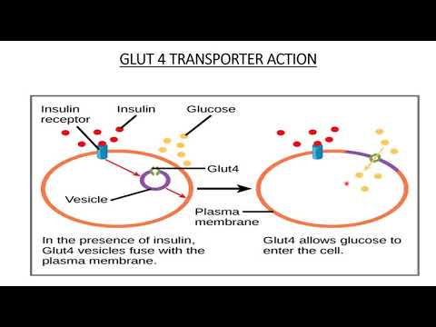 Facilitated Diffusion | Membrane Transport | Carrier & Channel | Important examples