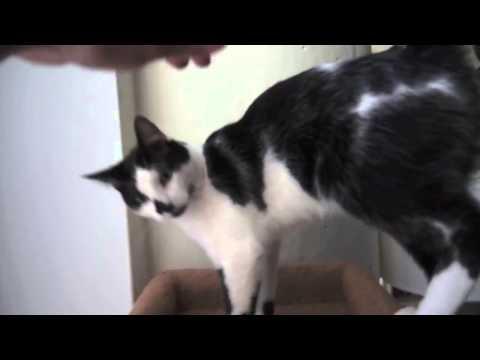 8 признаков того что ваш кот собака