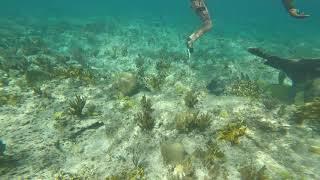 Coral cave dive