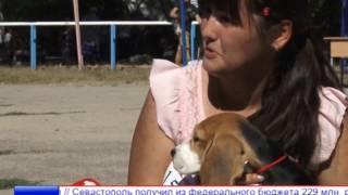 В Симферополе прошла выставка собак