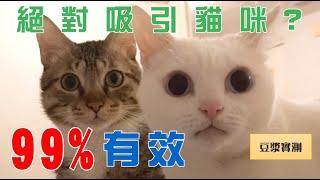 【豆漿實測】99%能吸引貓咪! | 99% Make cats come to you