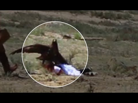 Wyoming To Relocate A Group Of Golden Eagles That Won't Stop Eating Ranchers' Sheep