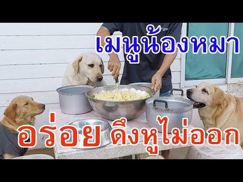 เมนูน้องหมา อาหารสุนัขปรุงเอง อาหารหมาทำเอง เมนูสำหรับสุนัขเบื่ออาหารเม็ด