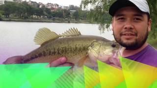 Black Bass de Bragança