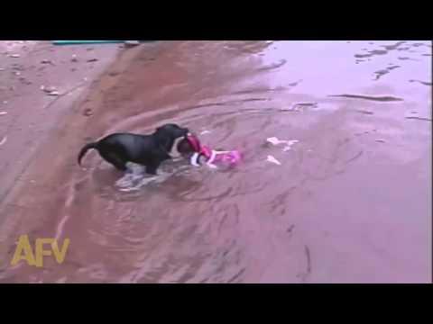 Собака спасает ребенка