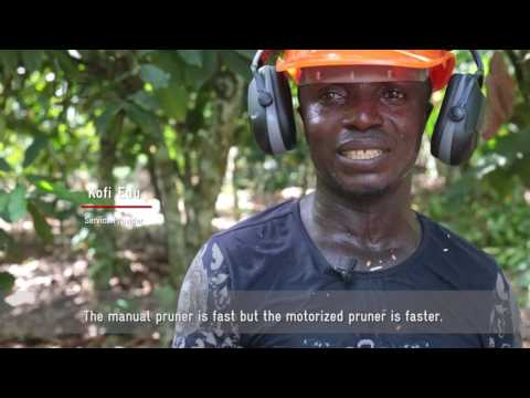 GIZ x Touton : Testing of a motorized pruner for pruning cocoa trees in Ghana