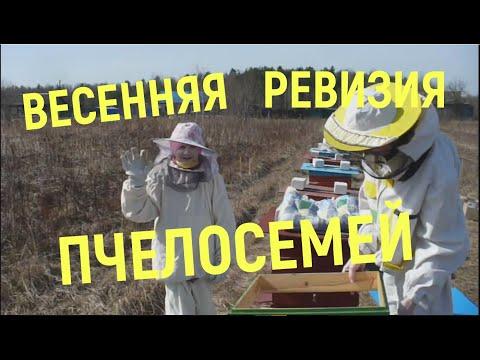 Весенняя ревизия(осмотр) пчелосемей.
