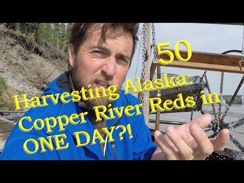 Alaska Fishwheel Subsistence & Copper River Red Salmon: Filetting Demonstration By A Real Alaskan.