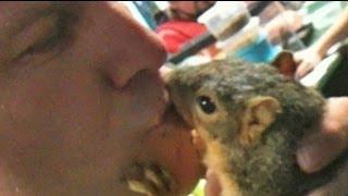 Repeat youtube video Coolest Pet Squirrel