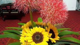 Cắm hoa#Cắm hoa để bàn#Hoa Hồng tú cầu kết hợp với hoa Hướng dương%Rực rỡ sắc màu đỏ vàng