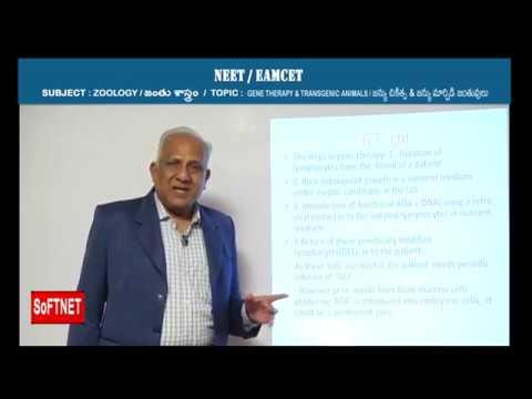ZOOLOGY    Gene Therapy & Transgenic Animals     Jaganmohan Rao