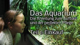 Das Aquarium - Die Anleitung zum Aufbau und Pflege. Teil 1: Einkauf