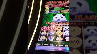 Seminole hard rock casino Florida  $5 bet