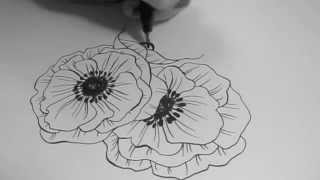 Speed Drawing - Poppy Flowers