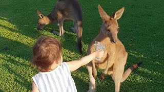 The cutest moment with kangaroos