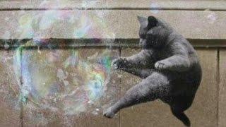 BUBBLE CATS   Birds of Prey (Indie Rock, Post-Punk, Epic Pop, Alternative)