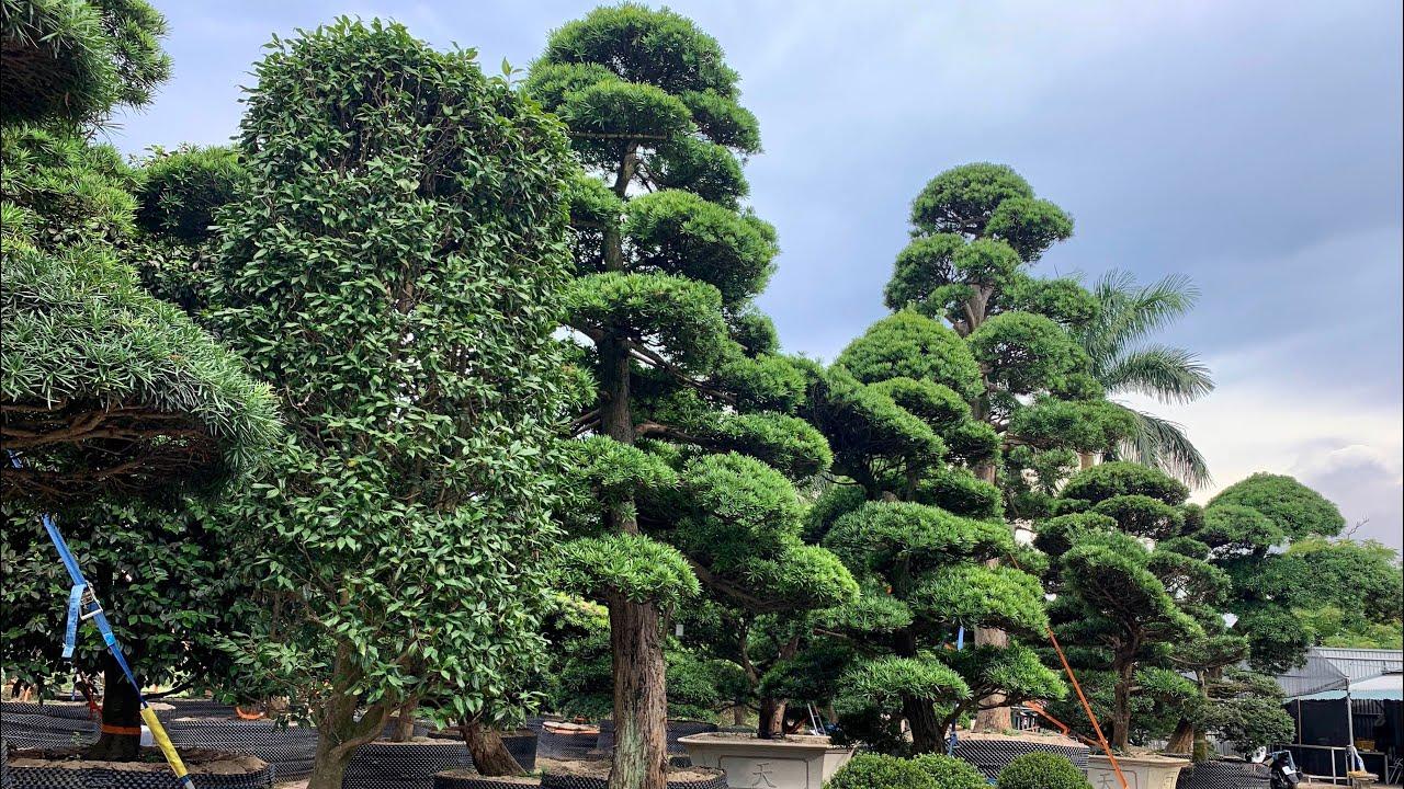 Kỷ niệm 10 năm thành lập Công ty Vườn Tùng La Hán Nhật Bản