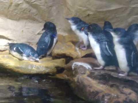 sydney underwater aquarium