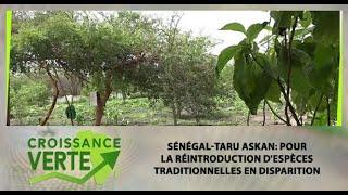 Sénégal-Taru Askan: pour la réintroduction d'espèces traditionnelles en disparition