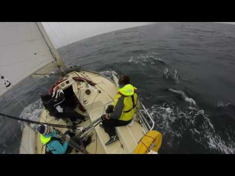 Irish Sea Dolphins from Aurora June 2016