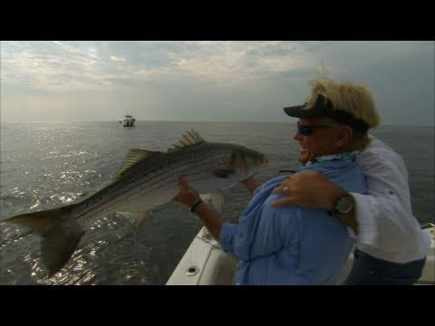 Striper fishing block island rhode island with live bait for Striper fishing ri