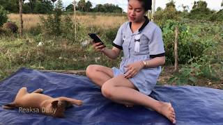 Cuties Funny girl and Dog Group - Kindly girl give special food to my Funny Puppies