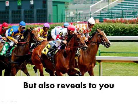 Horse Racing Calculator - The Most Accurate One