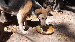 A dog female dog is eating food / Funny  Dogs / Cute Dogs Video / Funny Dog Clip 2020