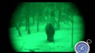 Охота на кабана и волка