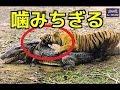 【衝撃映像】①トラの狩り ワニを捕食!首を攻撃!②危険動物たちの捕食&狩りハイライト!