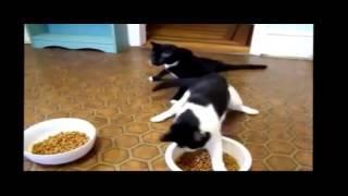 пьяные коты прикол;D