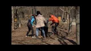 Черный пудель на защите (Black Poodle Guard Dog Training)