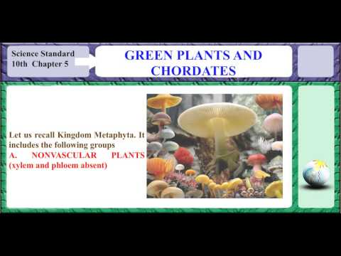 GREEN PLANTS AND CHORDATES