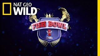Fish Bowl App | Nat Geo Wild
