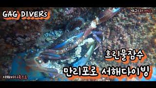 만리포 스쿠버다이빙 서해 흐린물잠수 실습!!